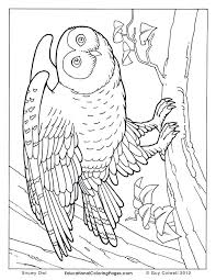 Realistic Coloring Pages Realistic People Coloring Pages For Kids