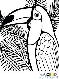 coloring pages of rainforest animals coloring pages printable coloring pages coloring page tropical coloring pages animals