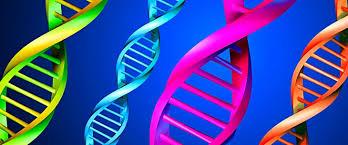 Resultado de imagem para genetics