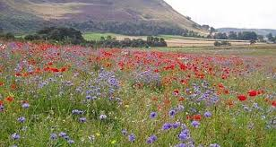 Small Picture Wildflower meadows for everyone Robert Kennett Garden Designer