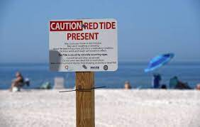 Red tide in Manatee County in 2021: 9 ...