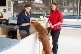 after hours emergency veterinary care you can trust