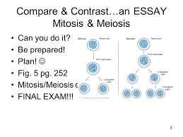 meiosis i ii don t forget interphase only once meiosis i  3 compare contrast an essay mitosis meiosis can you do it