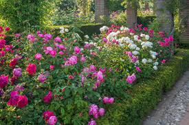 Small Picture Design a Rose Bed HGTV