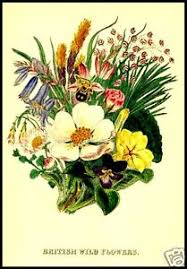 image is loading british wild flowers 28 old books on cd