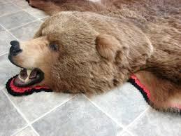 bear head rug taxidermy real brown bear rug bear skin rug taxidermy
