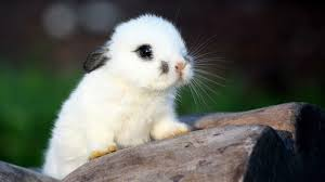 Cute Animals Wallpapers (68+ background ...