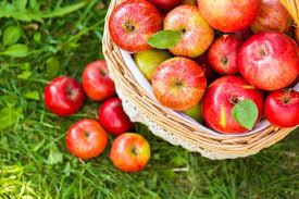 apple food. apple picking toronto food