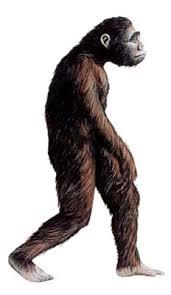 Resultado de imagen de Australopithecus ramidus