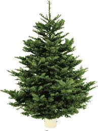 Know The Types Of Common Christmas Trees  AllYoucomTypes Of Fir Christmas Trees
