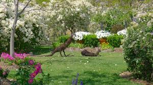 Heatheru0027s Romantic Cottage Garden U2013 8  Jerry ColebyWilliamsRomantic Cottage Gardens