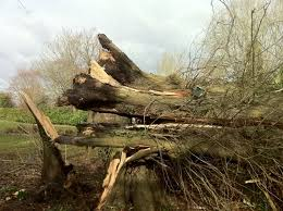 Tree Hazard And Risk Assessment Technical Arboriculture