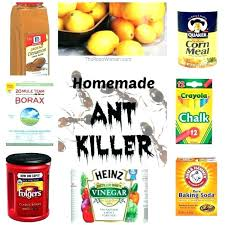 surprising best way to kill ants in kitchen image inspirations