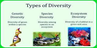 Species Diversity Definition Species Diversity Qs Study
