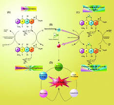 doxorubicin induced oxidative stress a