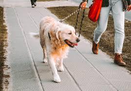 Dog Walk Pictures | Download Free Images on Unsplash