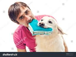 Man Shaped Pillow Young Man His Dog Fighting Over Stock Photo 44905753 Shutterstock