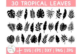 Jump to navigation jump to search. Tropical Leaves Svg Bundle Palm Leaves Svg Jungle Leaves 645842 Illustrations Design Bundles