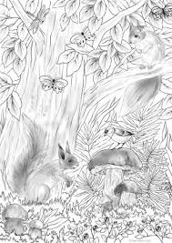 Squirrels Coloring Book Pages Coloring Pages Printable Adult
