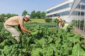 Kitchen Garden Preserves Community Gardening Chicago Botanic Garden