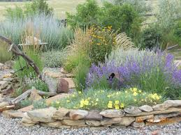 Small Picture Best 20 Drought tolerant landscape ideas on Pinterest Water