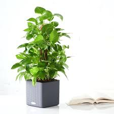 Indoor Trees Safe For Cats 7 Houseplants For Low Light Conditions ...