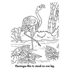 pictures of flamingos to color. Beautiful Color Flamingo Coloring Pages  A Standing On One Leg And Pictures Of Flamingos To Color