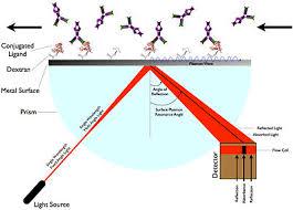 Surface Plasmon Resonance Wikipedia