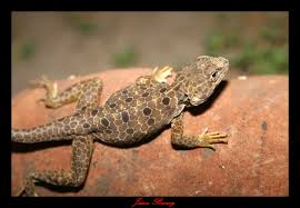Pictures Of Other Reptiles And Amphibians