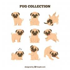 cute pug drawing. Simple Drawing Cute Pugs With Flat Design Inside Pug Drawing T