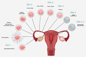 Ovulation Chart Pregnancy Signs Implantation Symptoms What Are The Early Signs