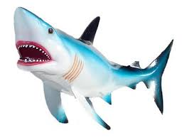 a ladymag interviews a shark for shark week by molly kottemann ladymag so how did you feel about shark week