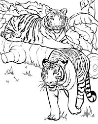 Tiger Printable Coloring Pages Coloring Pages Tiger Two Tigers Ready