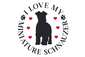 They are intelligent, and playful. I Love My Miniature Schnauzer Svg Cut Files Free Svg Cut Files Create Your Diy Projects Using Your Cricut Explore Silhouette