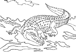 Small Picture Printable Alligator Coloring Pages Coloring Home