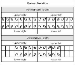 Palmer Notation Charting Dental Charts To Help You Understand The Tooth Numbering