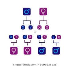 Gender Chart Images Stock Photos Vectors Shutterstock