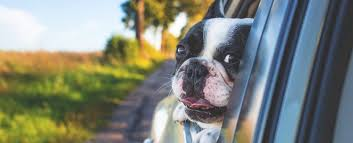 Best Pet Insurance Companies - November 2018 | LendEDU