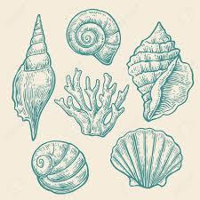 Vintage Illustrations Sea Shell Set Color Engraving Vintage Illustrations Isolated