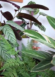 cat safe indoor plants house that are not toxic to pets uk cat safe indoor plants australia