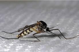 Ras le bol des moustiques tigres !!!