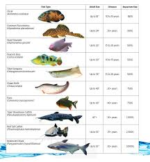 Monster Fish Care Sheet