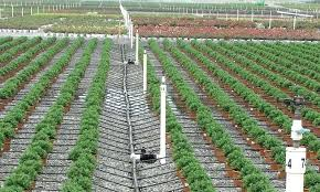 best drip irrigation system drip irrigation sub surface walkway and path aesthetic
