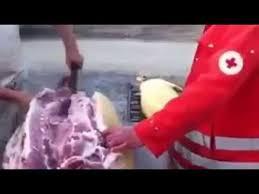 Transarea porcului pe burta
