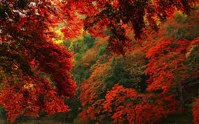 Red autumn forest hd #6915884