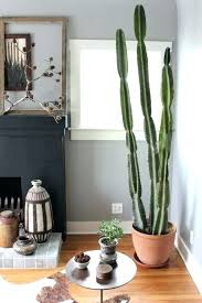 indoor plants that like shade best tall indoor plants how to care for indoor cacti tall indoor plants