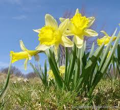 """Résultat de recherche d'images pour """"fleurs du printemps"""""""