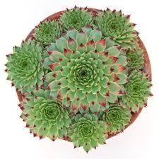 best succulents for a vertical garden