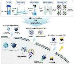 Electroporation For Nanomedicine A Review Journal Of Materials