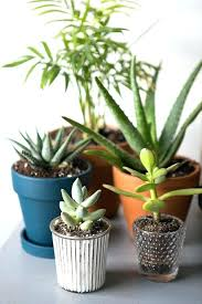 office plants no light. Office Plants No Natural Light How To Keep Your Indoor